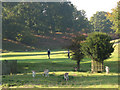 TQ5454 : Knole golf course, with deer by Stephen Craven
