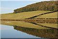 NT6426 : Baron's Folly Pond : Week 44