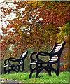 J3269 : Autumnal benches, Barnetts Demesne : Week 44