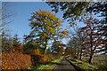 NS5427 : Minor road near Dykeneuk by Leslie Barrie