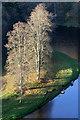 NT5934 : Trees by the River Tweed : Week 46