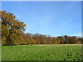 SU7688 : Pasture and woodland, Hambleden by Andrew Smith