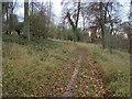 SU7495 : Footpath to Wellground Farm by Shaun Ferguson