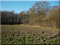 TL6255 : Hay Wood by Hugh Venables