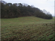 SU9695 : David's Woods by Shaun Ferguson