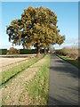TL1575 : Oak Tree  Woolley Road by Michael Trolove