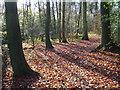 SU8695 : Woodcock Wood, Hughenden : Week 47