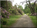 SS8086 : Track and rhododendrons, Margam Country Park by eswales