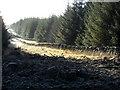 NX3078 : Forest Firebreak : Week 1