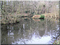 ST6363 : Pond in Lord's Wood near Woollard, Somerset by Rick Crowley