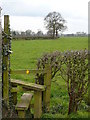 SJ8368 : Stile and field by Davenport Lane Farm, Marton by Colin Park