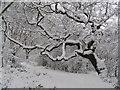 TQ3574 : One tree on One Tree Hill : Week 5