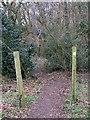 SP9205 : Path into Braid Wood by Rob Farrow