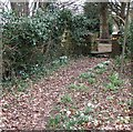 SP9107 : Snowdrops to stile by Rob Farrow