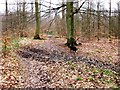 SP9208 : Old Cart Track through High Scrubs Wood by Chris Reynolds