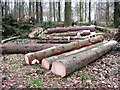 SP8908 : Freshly cut logs, Wendover Woods by Chris Reynolds