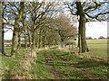 TQ0822 : Tree lined bridleway to Steepwood farm : Week 10