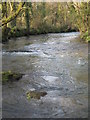 SX3467 : The River Lynher below Newbridge by Rod Allday