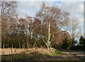 SJ6147 : Scrubland at Sound Heath by Espresso Addict