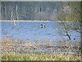 ST5259 : Blagdon Lake by Rick Crowley
