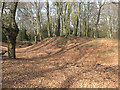 TL4300 : Epping Forest: Ambresbury Banks by Stephen Craven