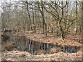 TQ4399 : Epping Forest: small pond by Stephen Craven