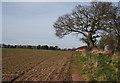 SJ6147 : Arable field north of the Weaver by Espresso Addict