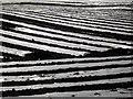 NX9279 : Polythene Sheets : Week 12