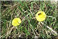 SP9313 : Coltsfoot at College Lake by Chris Reynolds
