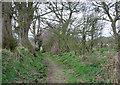 SJ5443 : Bishop Bennet Way & South Cheshire Way, near Wirswall by Espresso Addict
