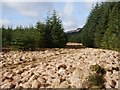 NN0305 : Forest ride : Week 14