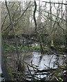 SJ6051 : Reeds in mere near Baddiley by Espresso Addict