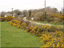 S9805 : Lane, gorse and pasture near Kilmore by David Hawgood