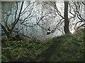 TQ3508 : Falmer Pond in Winter by Paul Gillett