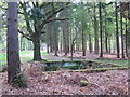 SU8967 : Tank in the Forest, Swinley Park by don cload