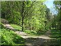 TQ5072 : Footpath junction in Joyden's Wood by David Anstiss