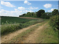 TL6056 : Track to Sheep Yard by Hugh Venables
