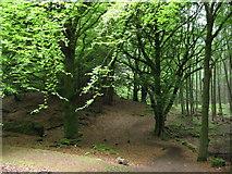 NN6208 : Callander Crags by Carol Walker