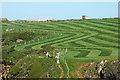 SM8433 : Field beside the Pembroke Coastal Path : Week 21