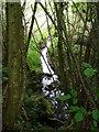 SU9324 : Stream through Lord's Wood by Diane Sambrook