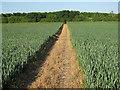 TL6555 : Path through the wheat by Hugh Venables