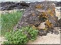 C5449 : Lichen, Culdaff beach by Kenneth  Allen