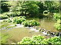 SK1452 : River Dove by Colin Smith
