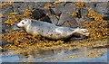 NT6699 : Wildlife on the Isle of May (2) : Week 22