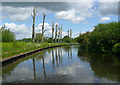 SJ9103 : Staffordshire and Worcestershire Canal north of Wolverhampton by Roger  Kidd