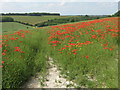TQ7764 : A poppy path to Chatham by David Anstiss