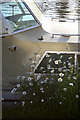 TQ0468 : Boat and Daisies by David Lally