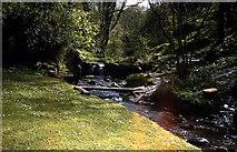 SX0788 : St Nectans Glen at Halgabron Mill by Dr Duncan Pepper
