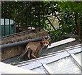 TQ2280 : Hello Foxy : Week 25