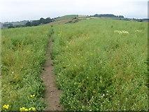 SE1309 : Footpath near Netherthong by Chris Wimbush